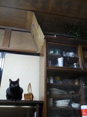 神棚を襲撃しに行けず不満顔の実家猫くろこさん