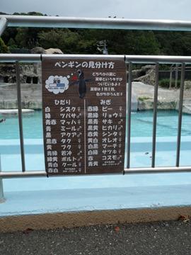 ペンギンの見分け方@日本平動物園