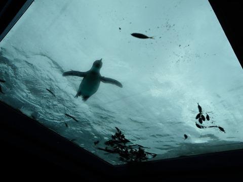 ペンギンインザスカイ@日本平動物園