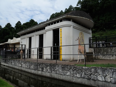 キリン舎@日本平動物園