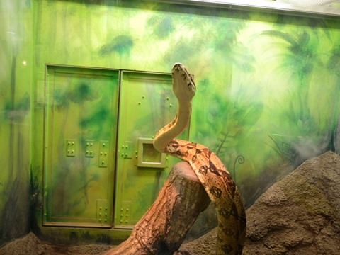 へび@日本平動物園
