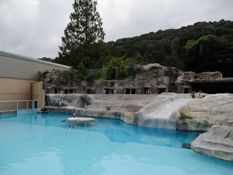 ペンギン舎@日本平動物園