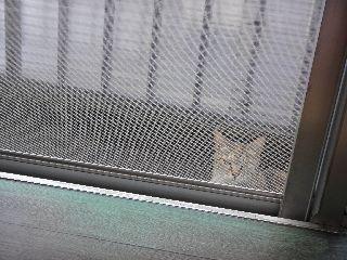 やってきた猫(両ぎざみみ)