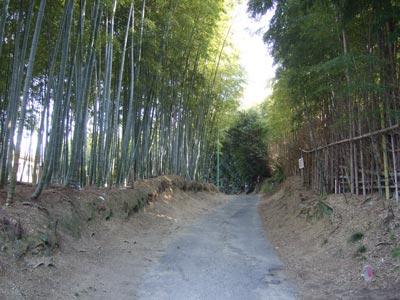 竹林の合間の小路