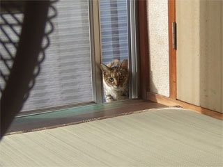 夏の猫襲撃